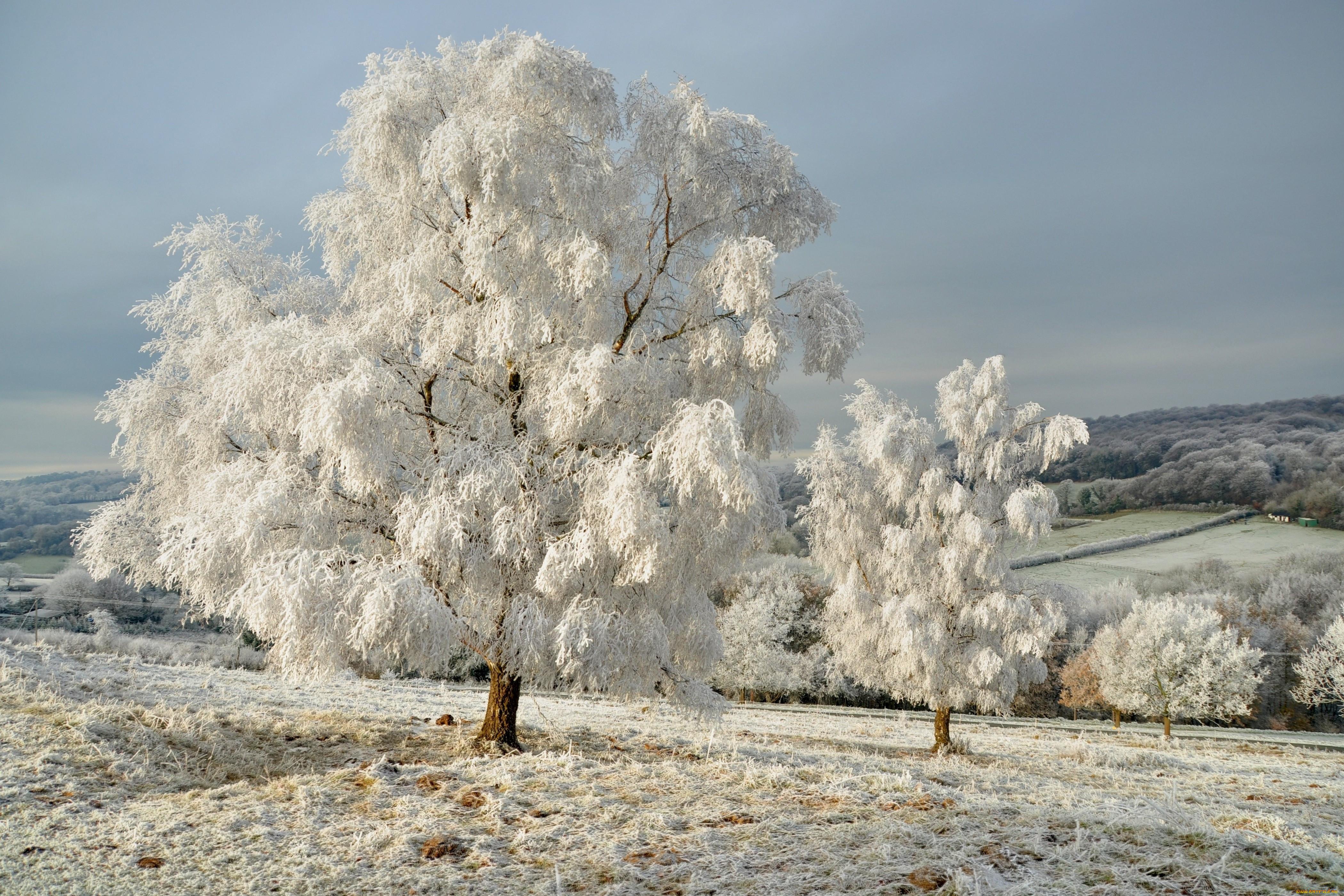картинки заснеженного леса деревья в инее милые